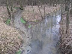 Radomirka a z lewej dopływ ze źródła w Stryjnie