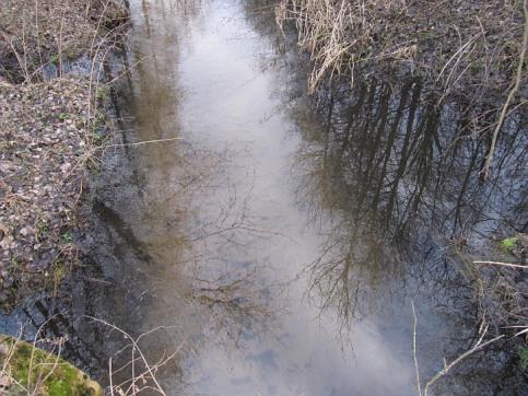 Bezimienny dopłym Mininy w Kozłowieckim Parku Krajobrazowym