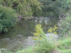 Ostatni metry dzikiej rzeki