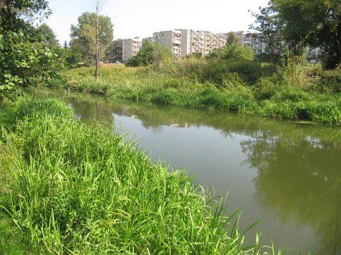 Dzika rzeka wśród bloków