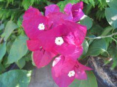 ogrod_botaniczny_lublin19