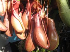 ogrod_botaniczny_lublin22