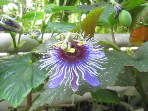 ogrod_botaniczny_lublin24