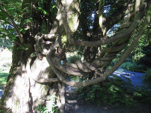 ogrod_botaniczny_lublin7