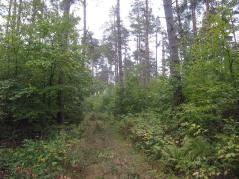 Droga główna z żółtym szlakiem