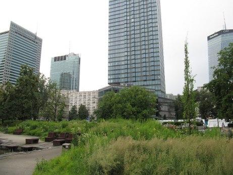 Plac Grzybowski. Piękne trawy