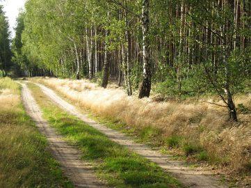droga_trawy_narew