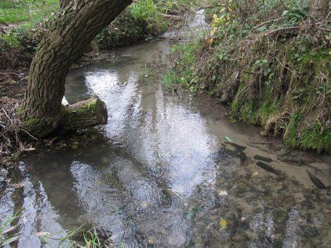 Dolina Kosarzewki