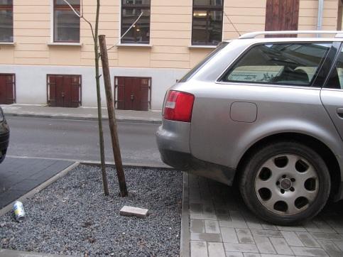 Audi stoi na chodniku, a nie na miejscuy parkingowym. To drzewko zostało posadzone w lato w ramach remontu ulicy.