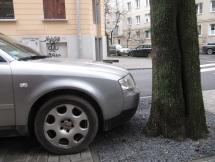 To samo audi z drugiej strony. Tu jak widać nie mieści się samochód. Z tyłu nowe drzewko z przodu stare. Ciasno i dlatego nie parkuje sie tutaj.