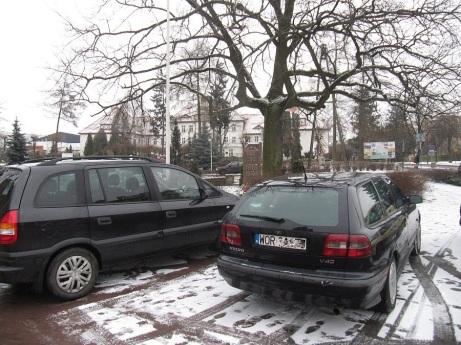 Dąb wolności i pomnik wyglądają zza samochodów