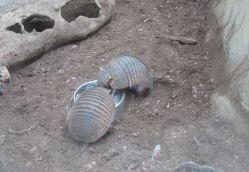 zoo_budapeszt_3