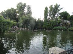 zoo_budapeszt_33