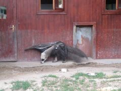 zoo_budapeszt_6